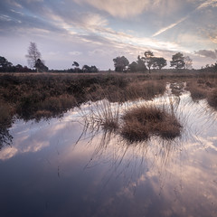 Skipwith Sunrise Pano (Draws_With_Light) Tags: camera winter panorama david tree water sunrise canon woodland season landscape eos mark yorkshire iii north hard places scene filter ii 09 lee nd vegetation 5d filters common grad marshland northyorkshire skipwith polarising polarisingfilter tse24mm skipwithcommon f35l hopley canoneos5dmarkiii tse24mmf35lii lee09ndhardgrad davidhopley