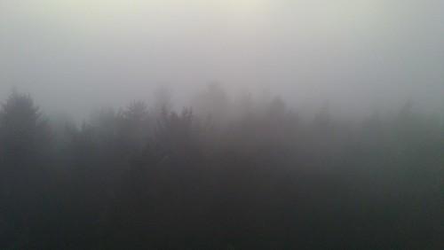 Hutwisch im Nebel 8