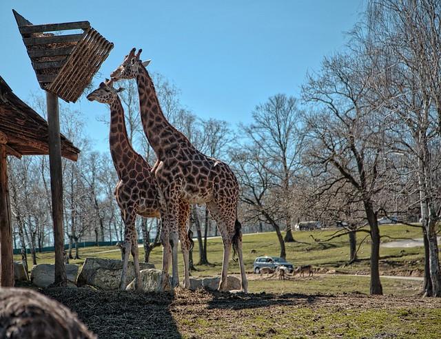 Safari Park - Pombia