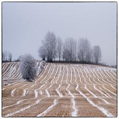 December Fields (Krogen) Tags: norway norge norwegen akershus romerike krogen ullensaker hovin olympuse3