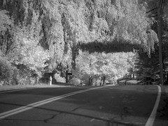 P9210027 - Road Roof (Syed HJ) Tags: olympusem5 olympus em5 fujian50mmf14 fujian50mm fujian 50mm cctvlens cctv 950nm infrared ir blackandwhite blackwhite bw trees tree