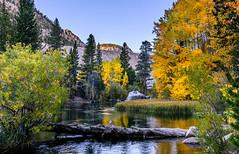 Fishing in Bishop Creek (m e a n d e r i n g s) Tags: bishopcreek lakesabrina bishop autumn foliage fall eastern sierras fishing sunrise california