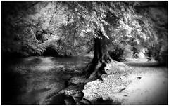 (Riik@mctr) Tags: wilmslow cheshire twinnies bridge carrs park bollin river valley riverside walk woodland nokia n95 fone phone monochrome texture blackandwhite surreal