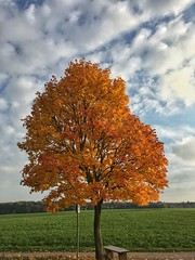 Oktober (Kyriakos11) Tags: de germany hessen kyriakos11 oberfeld darmstadt herbst autumn oktober