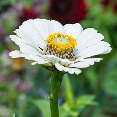 white flower (Sarah Anne Mac) Tags: whiteflower