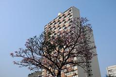 Todos querem o cu (renanluna) Tags: cu sky rvore tree prdio building cores colors cor color colorido colorful sopaulo sp br 55 fuji fujifilm fujifilmfinepixx100 x100 renanluna