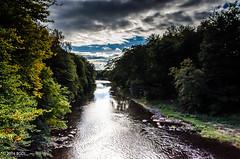 Let's Go, Lewis! (BGDL) Tags: lightroomcc nikond7000 bgdl landscape afsnikkor18105mm13556g riverayr countryside rural auchincruive trees weeklytheme flickrlounge