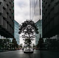 The Last Ones Belong In A Zoo - London City Life by Simon & His Camera (Simon & His Camera) Tags: tree reflection office glass mirror city urban london architecture autumn building contrast simonandhiscamera silhouette composition lines light nature outdoor people passage window