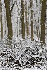 ckuchem-2 (christine_kuchem) Tags: asthaufen baumstamm eis forst frost haufen holz staatsforst stmme tiere unterschlupf wald wasser wildnis winter winterschlaf winterwald gefroren gewsser kalt naturnah reif schnee wild ste