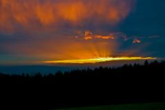 Der Himmel ber dem Wald (berndtolksdorf1) Tags: blau orange himmel sky air wald landschaft landscape outdoor abendstimmung lichtstimmung