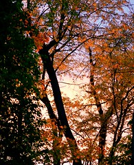 Autumn Evening (imageClear) Tags: trees orange autumn fall seasons afternoon evening light lovely beauty color aperture nikon d500 105mm nature imageclear flickr photostream