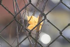 Wonderful autumn leaf (milance1965) Tags: herbst autumn herbsttag autumnday licht light sonne oktober sony a55 100mm
