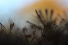 Herbstgeflster (borchert.regina) Tags: macro unschrfe licht