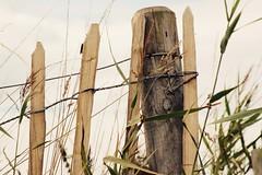 (Pea Jay How) Tags: fence friday fencefriday hff marram grass coast coastal beach