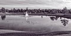 Crescent Park (brev99) Tags: crescentpark tulsa pond fountain water ducks trees monochrome selenium tone perfecteffects10 ononesoftware colorefex sigma185028hsm d7100 blackandwhite