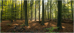 Autumn is here, Netherlands (CvK Photography) Tags: autumn autumncolors canon color cvk europe fall forrest landscape nature netherlands outdoor overijssel sun sunray twente enschede nederland nl