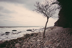 (ferrosplav) Tags: ruegen rügen baltic sea ostsee stones bw waves tree chalk cliffs