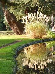 reflet automnal (anna.patalagoity) Tags: reflets automne massey tarbes jardin garden roseaux tilleul rivire lumire eau fleurs vert blanc