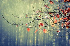 Nature's dance through seasons. (Kalev Lait photography) Tags: leaves autumn fall branch tree vignette dof bokeh