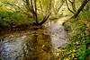 River Darent (mickmassie) Tags: darent