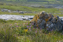 The Burren - Ireland (Photography by Eric Hentze) Tags: outdoor landscape landschaft nautrephotography nature natur irland ireland wiese nikon3200 d3200 erichentze 2015 felsen flower meadow rock irish reise travel urlaub colour 50300mm blumen pflanze green grn burren theburren flickrtravelaward