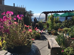the seniors' community garden at Pike Place Market on the bay downtown (Aleksander & Milam) Tags: seattle washingtonstate pikeplacemarket