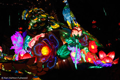 _MG_2609 (lemonredox) Tags: halloween 2016 luminate gilroy gardens lumination gilroygardens luminationgilroygardens lights asian chinese bejeweled qilin welcome gate gateway of good fortune nineheaven pagoda guardian lions cranes with moon ming vases palace lantern vase imperial peacocks carp jumping over the dragon ceremonial drums peach trees pathway to prosperity flower forest knots terracotta warriors temple heaven panda sanctuary fairies tang dynasty marketplace lampposts great wall china arches apsaras dream red chamber faces playful porcelain zodiac