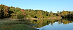 Kwintelooyen 29 oktober (Cajaflez) Tags: autumn herfst herbst autun kwintelooyen trees bomen meertje reflections reflecties spiegelingen ngc npc