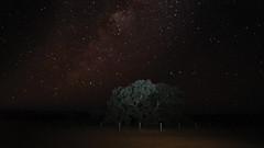 _DSC1280 (slackest2) Tags: lone gum tree simpson desert coolaba rig road track outback bush donga stars milky way night time