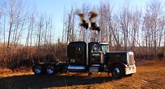 Fancy (jr-transport) Tags: peterbilt 359 classic numbered limited largecar smoke epa