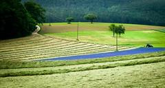 Blaues Feld (r0llinger) Tags: pfalz trecker landwirtschaft grn germany