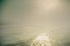 Burning through (peaflockster) Tags: california sandiego waterfront fog atmospheric light ocean