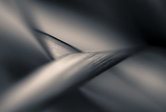 Turn a different corner.... (Photography by Julia Martin) Tags: photographybyjuliamartin turnadifferentcorner abstract dreamy shallowdepthoffocus mono leaves intertwining
