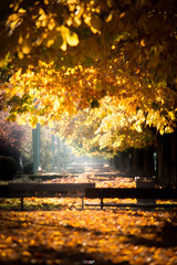 Paseo de Condesa Sagasta (Yezrael Pérez) Tags: sun flare naturelovers hojas nature colores city sol leonesp otoño hazdeluz