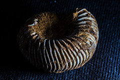 Ammonite (Neil_Henderson) Tags: macro tamronspaf90mmf28dimacro flash offcamera closeup ammonite fossil
