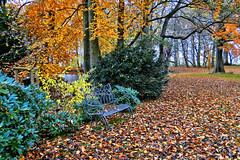 Herbstlicher Park am Gutshaus Kubbelkow (Rganer Egon) Tags: herbst inselrgen kubbelkow rganeregon