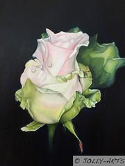 91 - La Rose