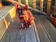Visa the kitten (AlanJ97) Tags: summer cat kitten meow visa lahinch surfcity lehinch