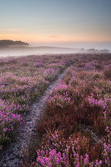Misty Heather (Stu Meech) Tags: new summer portrait sky mist forest sunrise landscape nikon stu path heather hard lee bloom d750 late filters grad lead orientation enclosure the in 1635 meech hasley 06nd 09ndhardgrad