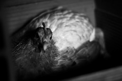 Animal Lover 'Inner Space' (ekvartalo) Tags: chicken egg huevo ovo gallina kokino