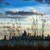 Prairie City, Squared (Andy Marfia) Tags: sky urban chicago nature grass skyline clouds iso100 lakemichigan prairie f8 squarecrop lakefront citiscape montrosepoint 1320sec montrosepointbirdsanctuary d7100 1685mm