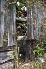 Overgrown (jmhutnik) Tags: wood autumn fall abandoned barn neglected growth overgrowth dilapitated