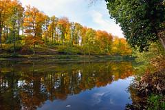 l'automne est l l't s'en va (Excalibur67) Tags: autumn trees forest automne landscape nikon sigma arbres alsace paysage reflexion reflets eaux tangs d7100 vosgesdunord forts ex1020f456dchsm
