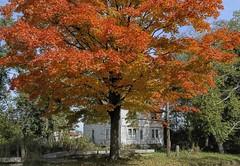Fall is Here (MalaneyStuff) Tags: usa fall colors wisconsin rural nikon seasons changing d5100 ruraloct2015
