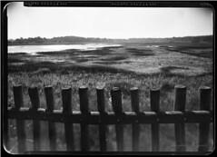 Maasduinen 3 (Jürgen Hegner) Tags: analog landscape daylight fuji xray rodinal landschaft largeformat schwarzweis 13x18 13x18cm xrayfilm jürgenhegner shenhaofcl57a