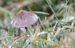Hatfield_Forest-43 (Eldorino) Tags: park uk morning autumn trees nature forest sunrise landscape countryside nikon britain centre jour hatfield bishops stortford essex hertfordshire stanstead hatfieldforest