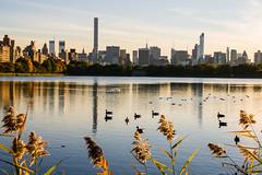 Ducks on Jackie O (dicksoto) Tags: nyc newyorkcity autumn newyork water leaves skyline leaf centralpark manhattan ducks nycskyline jacquelinekennedyonassisreservoir