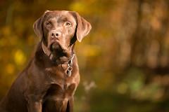 taylor_tal-6 (Florian Jakob Rothlehner) Tags: hund hasutier drausen blitz strobist 6d canon bokeh lastolite firefly yongnuo