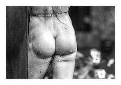 Bummer I am Not Much of a Gardener! (red stilletto) Tags: oakdenewinery oceangrove wallington garden garlands bellarinepeninsula sculpture art blackandwhite famousflickrfive cobwebs rain raindrops flowers
