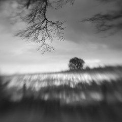 Nether Wood 87 - Where they were buried (Adam Clutterbuck) Tags: wood uk greatbritain england blackandwhite bw tree monochrome lensbaby square landscape mono blackwhite unitedkingdom britain somerset bn elements gb bandw sq mendips charterhouse undergrowth nether greengage netherwood adamclutterbuck sqbw bwsq showinrecentset